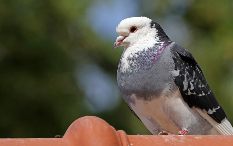 Bird Exterminator in Ashburn, VA