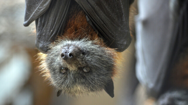 Bat Exterminator in Ashburn