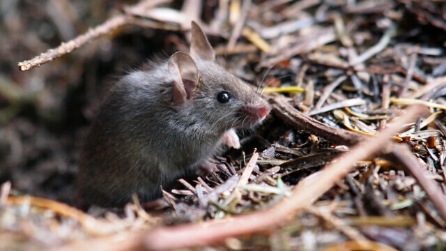 Mice Exterminator in Ashburn