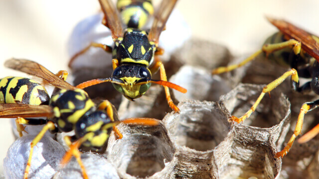 Wasp Exterminator in Ashburn